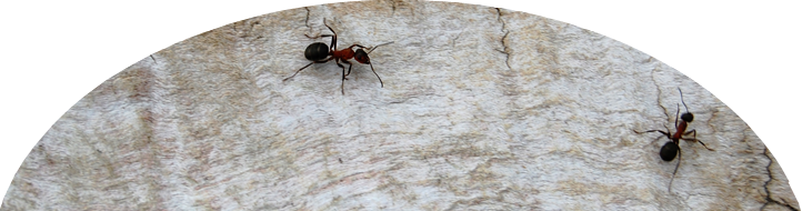 Ideas for Preschoolers: Ants